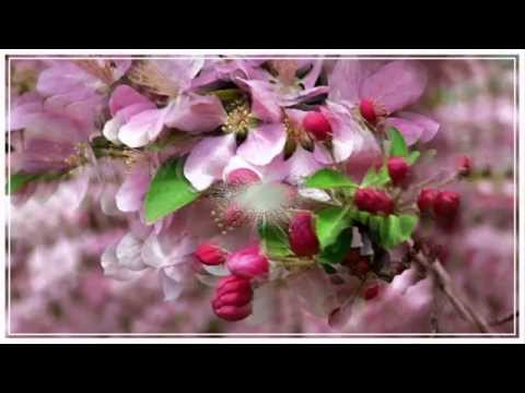 Richard Clayderman ♫ Ballade pour Adeline♫