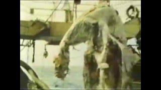 Drangon gigante encontrado en el mar de Japon INCREIBLE thumbnail