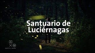 Santuario de Luciérnagas 4K | Alan por el mundo thumbnail