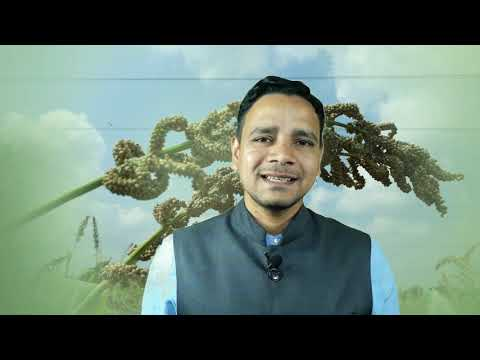 Experiences of Certified Farm Advisor on Millets