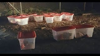 When Rescuers Found These 14 Tubs Outside Their Shelter, They Were Stunned By What Lay Inside