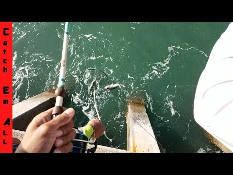 BEST PIER ON EARTH: How to CATCH EVERYTHING part1