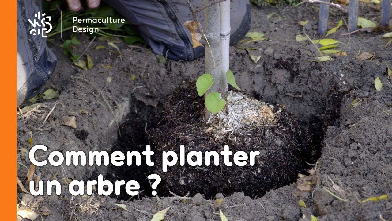 Comment Planter Un Arbre Fruitier comment planter un arbre ?
