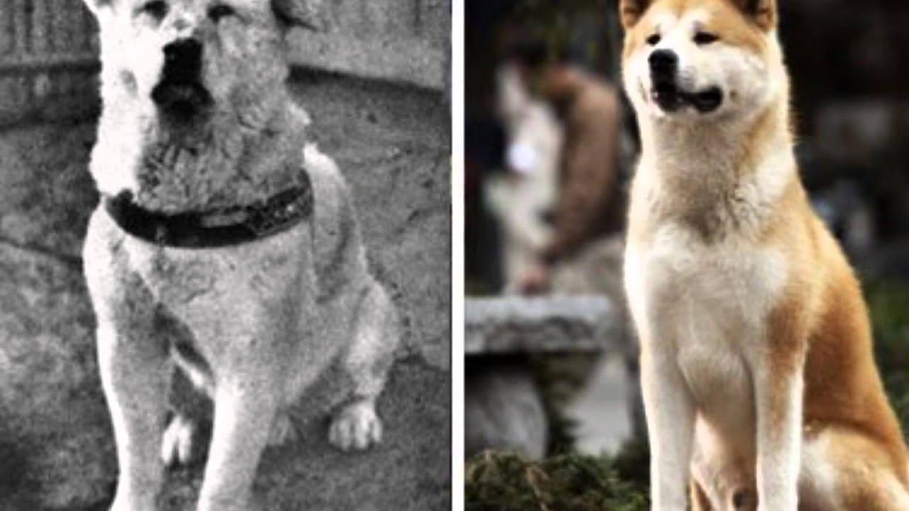 Movie Hachi Dog
