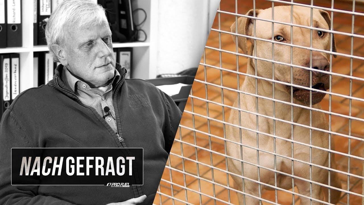 NACHGEFRAGT #2: Letzte Rettung Tierheim - Interview mit Tierschützer Herbert Rückert