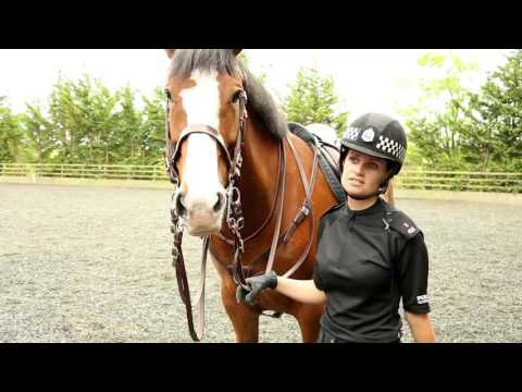 A Day in the Life - Police Scotland Mounted Unit