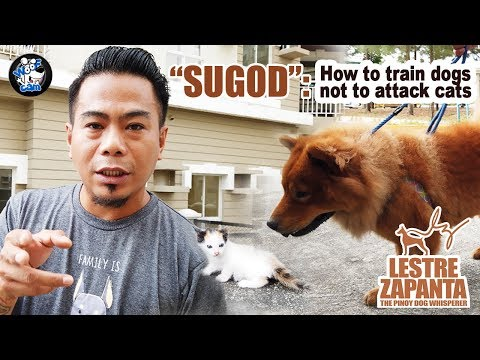 WOOFCAM l Sugod: How to train dogs not to attack cats l Lestre Zapanta