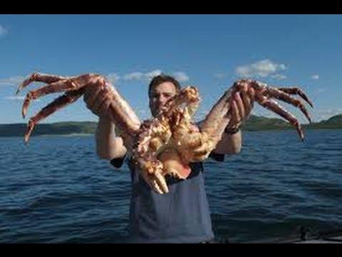 Fishing King Crab In Alaskan Big Crab Planetfish Youtube