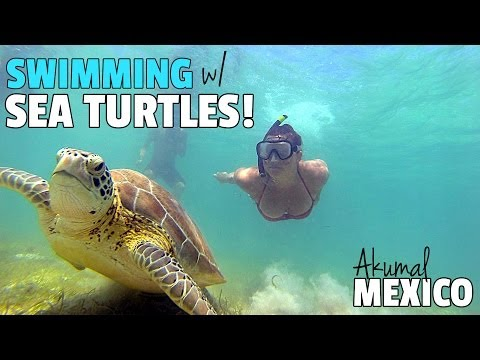 SWIMMING WITH SEA TURTLES IN AKUMAL!