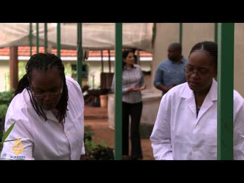 Innovate Africa - Transforming food