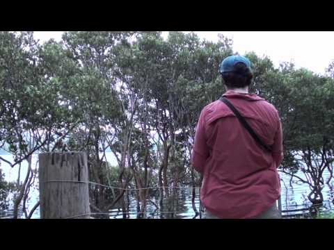Merimbula Walk (Part 1).mov