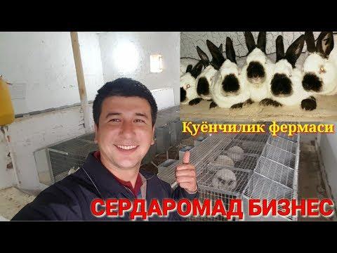 ҚУЁН ФЕРМА ТАШКИЛ ЭТИШ КИМГА ҚУЁН КЕРАК БУЛСА