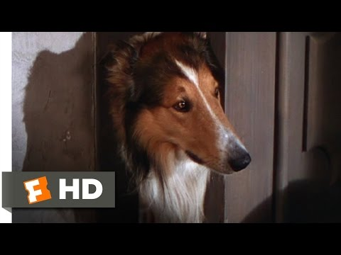 Lassie Come Home (1/10) Movie CLIP - Morning Routine (1943) HD