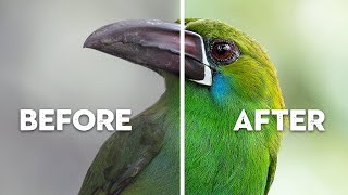 What's RUINING Your Bird Photography?   Common Beginner Mistakes
