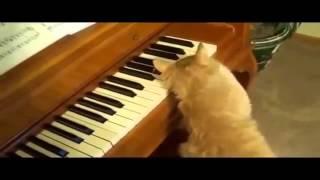 Смешные кошки 13