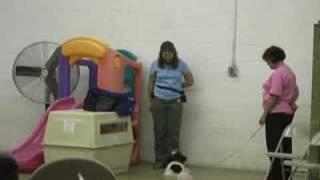 Wilmington Delaware Dog Training