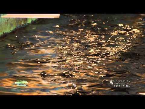 Saratoga Fish Hatchery