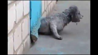 Köpeğin Kaçmasına Yardım Eden Kedi