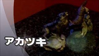この歌が似合う季節になってきますたね~(^▽^)♪ キー設定:原曲.
