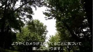 場所:仁徳天皇陵古墳 日付:2012/5/13 自転車:Louis Garneau TRX1 カ...