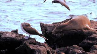 "Galapagos Marine Birds... the ""eyes of the seas"""