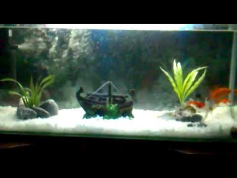 Aquarium poisson youtube for Aquarium poisson rouge taille