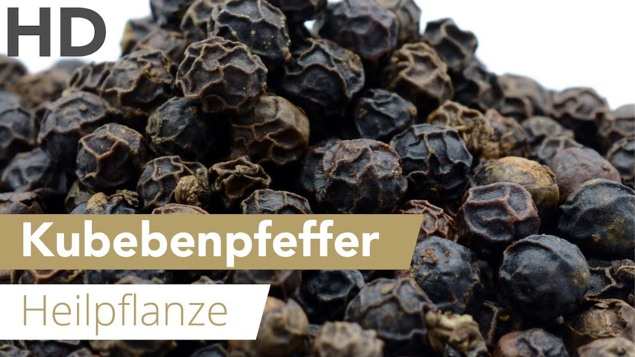 Heilpflanze Kubebenpfeffer // Heilwirkung