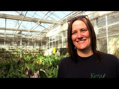 The London Story - Royal Botanic Gardens, Kew