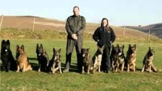 Diy Dog Training Ideas