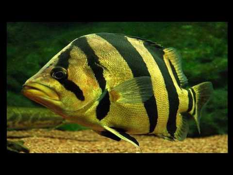 TOP 10 MOST EXOTIC FRESHWATER FISHES