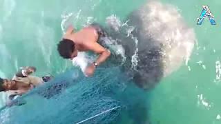 Big Fish Caught in The Sea are Recorded
