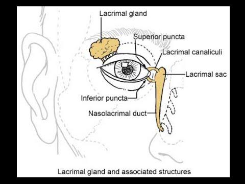 Orbital anatomy tutorial - YouTube
