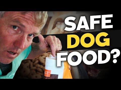 10 Dog Foods Not Linked To Canine Heart Disease