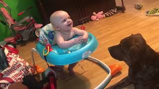 Top 10 Adorable Dogs take care babies # 2 | Funny Babies and Pets