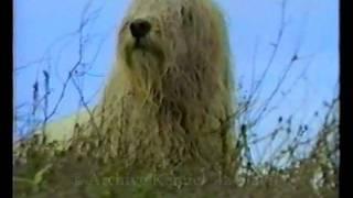 Фильм о южнорусской овчарке