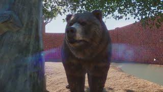 Planet Zoo #6 - Niedźwiedź Grizzly i zwierzęta Sawanne