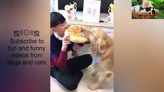 [Dog and Cat] Lovely moments and playfulness of cats and dogs