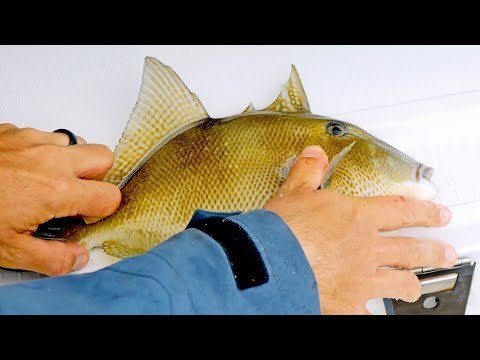Fishing for Triggerfish, Trout, Snappers, Jacks while Battling Red Tide and Terrible Weather