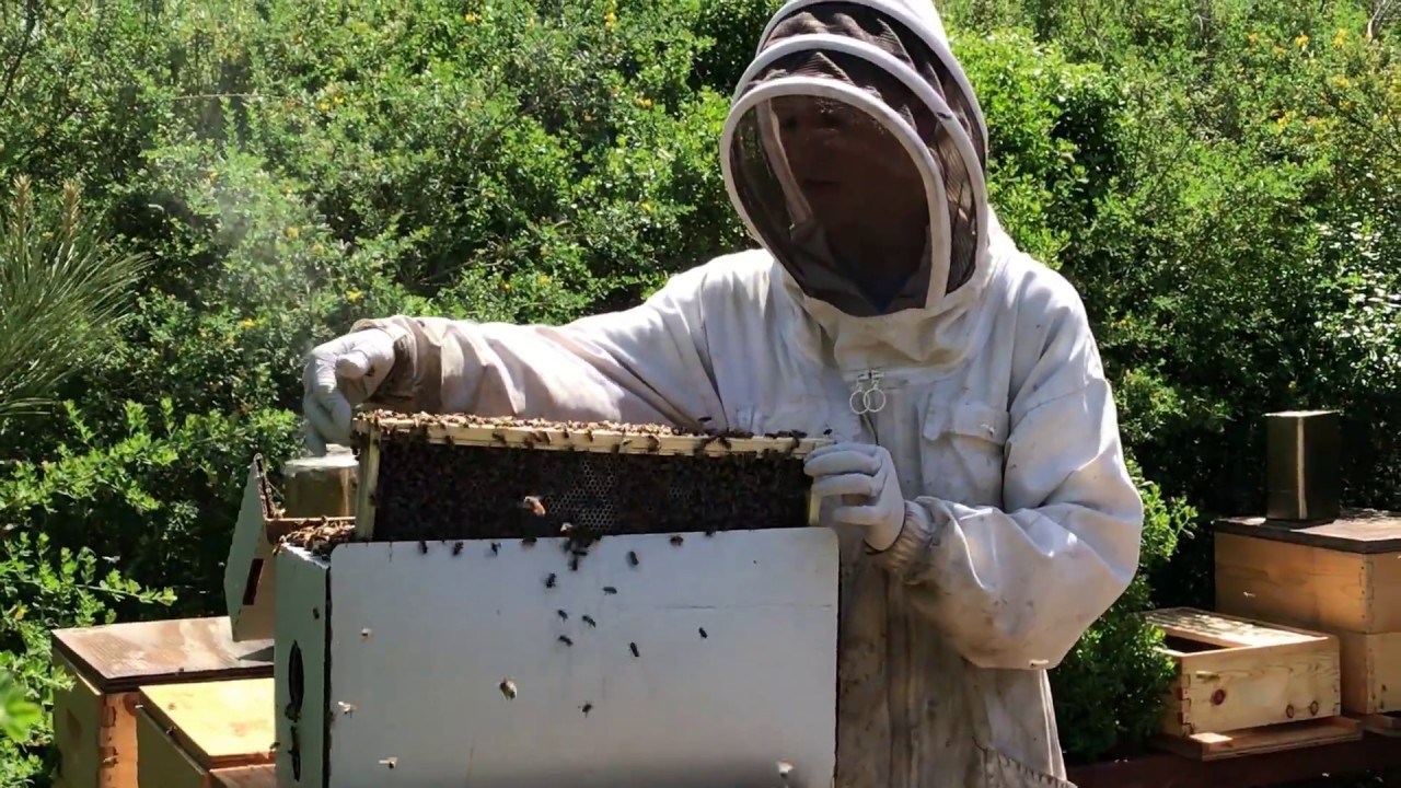 How To Install A Nuc  Bees