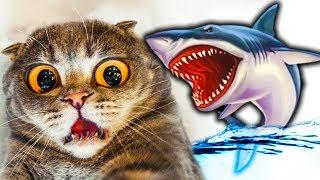 #4 КОТЕНОК РЫБОЛОВ симулятор кошачьей рыбалки АКУЛА утащила мою рыбу веселый летсплей от фгтв