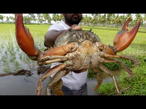 #Live Big Crabs Fastest Cleaning and Cutting | Crab Cutting Technique | my3 street food street food