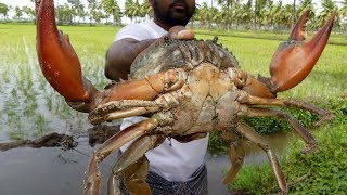 #Live Big Crabs Fastest Cleaning and Cutting | Crab Cutting Technique | my3 street food