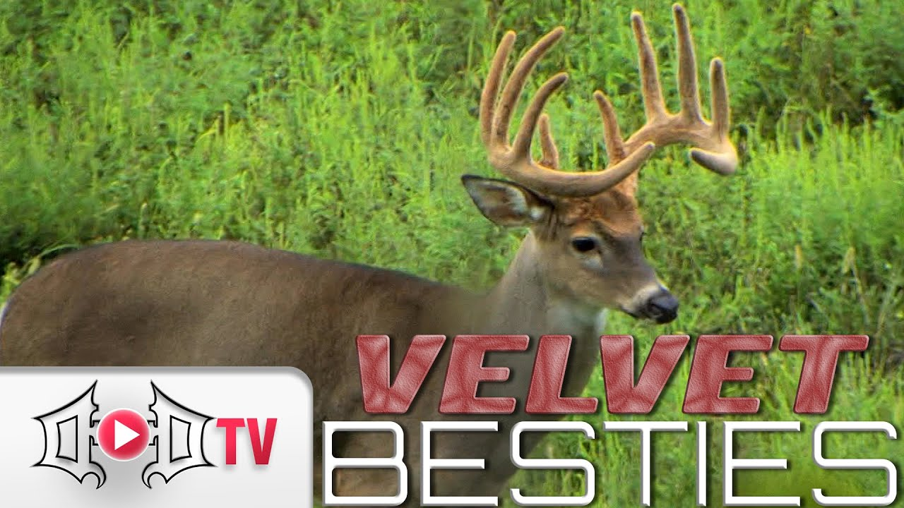 Early Season Bow Hunting Tree Stand Locations | Big Game
