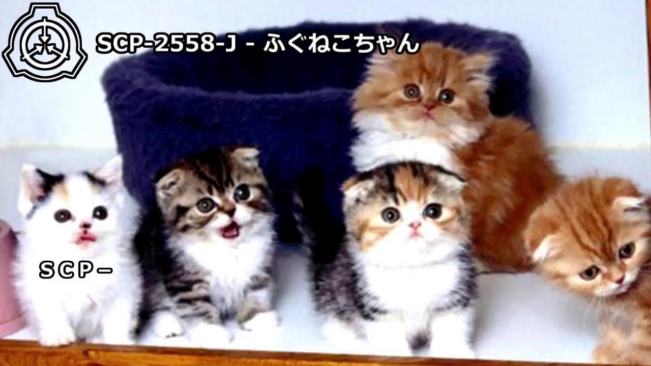 【怪異214】SCP-2558-J - ふぐねこちゃん - YouTube