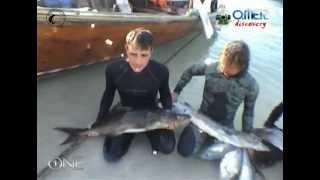 Краткий видео-отчет о подводной охоте в Таиланде(В рамках экспедиции OMER DISCOVERY Vodolaz-Radio отправилось в Таиланд, чтобы на собственном опыте познакомиться с подв..., 2012-03-04T18:26:42.000Z)
