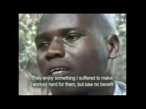 Cocoa Slavery - Ivory Coast