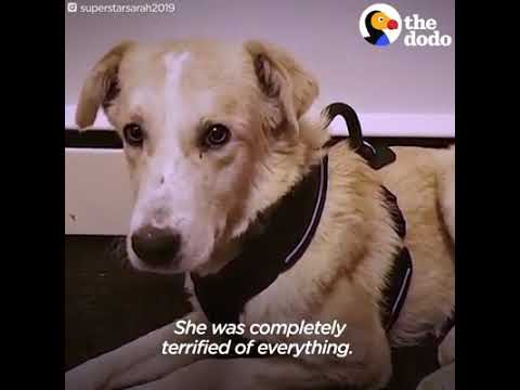 Heart touching story of the Dog - YouTube