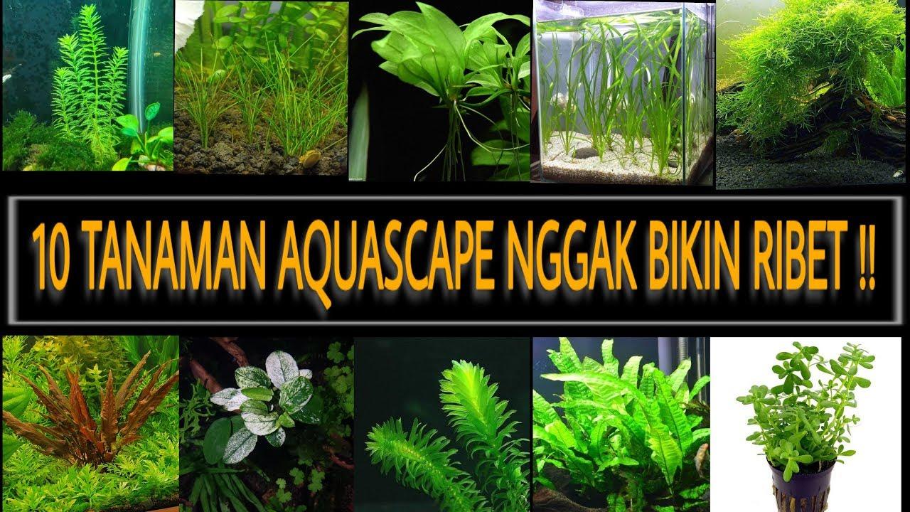 Ini Cara Sukses Adaptasi Moss Darat Menjadi Moss Air Untuk Aquascape Youtube