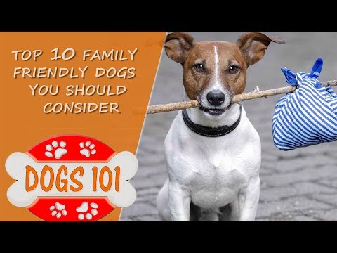 Looking for the BEST family Dog?  Here are the Top 10 Family friendly dogs to Consider!