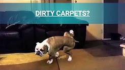 Precision Pro Dry Carpet Cleaning in Clermont Florida